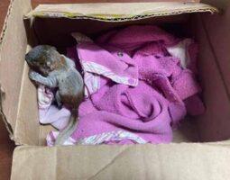 Caen dos presuntos vendedores de animales silvestres