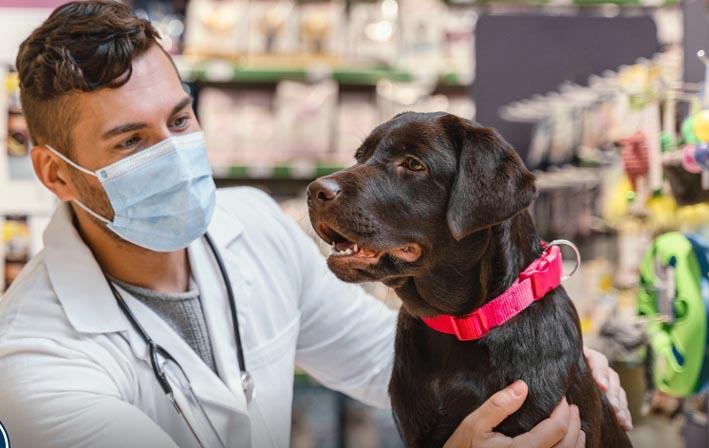UPAEP con el apoyo del CONCYTEP realiza investigación sobre la susceptibilidad de perros y gatos al SARS-CoV-2